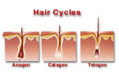 Dermal Laser Centres - Hair Cycles - 50K