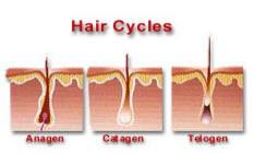 Dermal Laser Centres - Hair Cycles - 50K